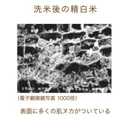 洗米後の精白米